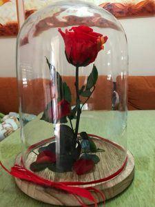rosa liofilizada encapsulada