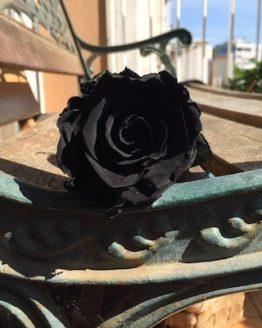 rosa preservada negra