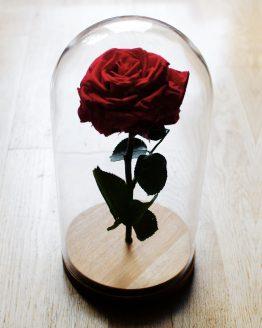 comprar rosa encantada de la bella y la bestia
