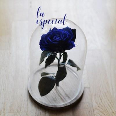 rosa encantada azul