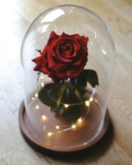 rosa encantada bella bestia