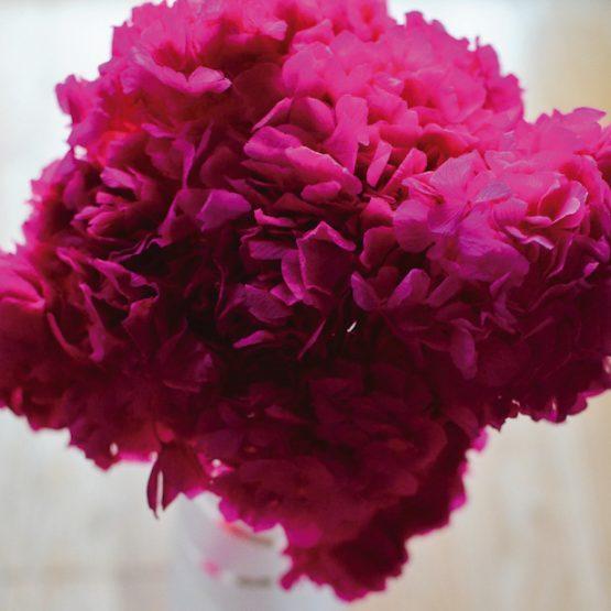 comprar hortensia preservada