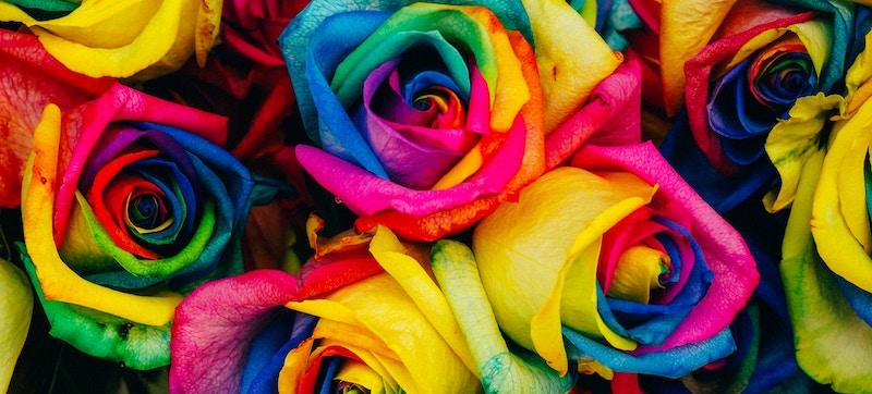 rosa arcoíris natural