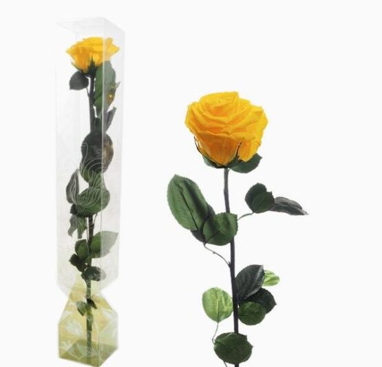 rosa preservada amarilla