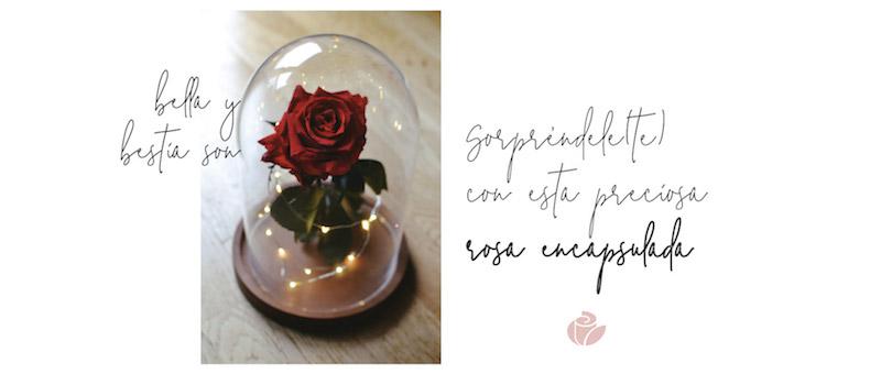 comprar tu rosa encantada en Rosaeterna.online