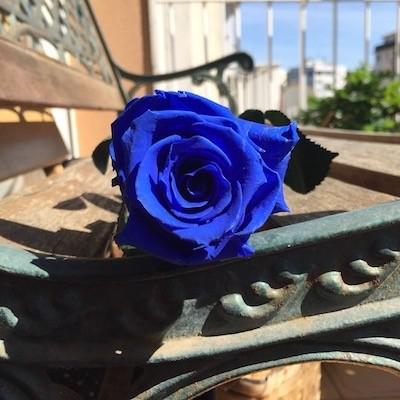 significado de la rosa azul