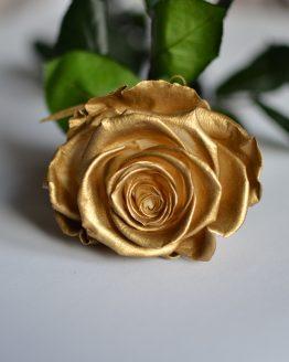 rosa eterna dorada