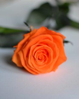 rosa eterna naranja