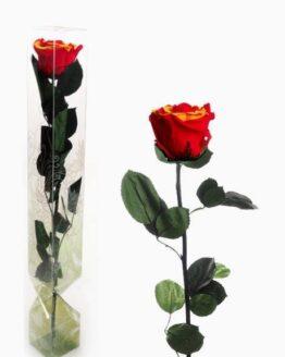 rosa preservada sant jordi