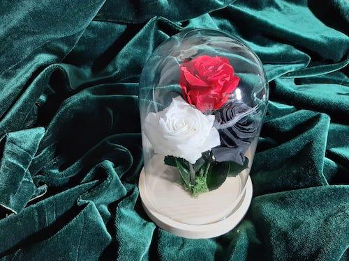 Rosa Bella Premium