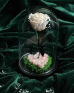 rosa petit coeur rosa