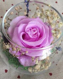 rosa rosa en vaso