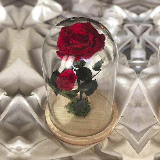 rosa mamá
