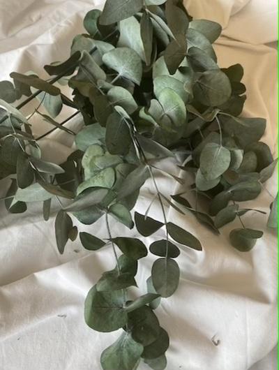 ramo de eucalipto preservado online