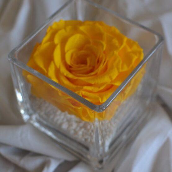 rosa preservada en vaso cuadrado amarilla