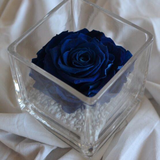 rosa preservada en vaso cuadrado azul