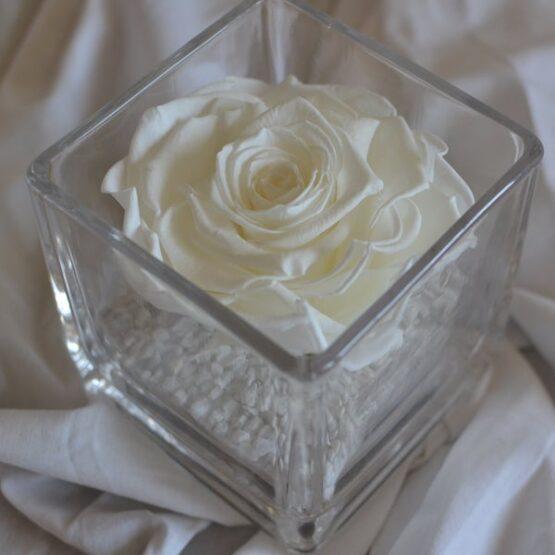 rosa preservada en vaso cuadrado blanco