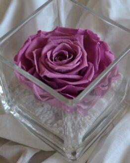 rosa preservada en vaso cuadrado colorete
