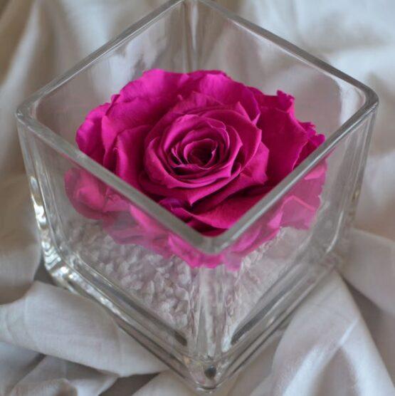 rosa preservada en vaso cuadrado fucsia