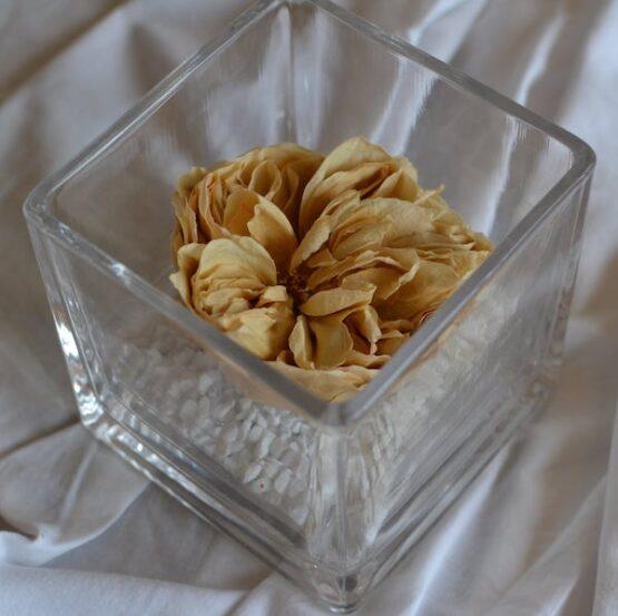 rosa preservada en vaso cuadrado garden rose