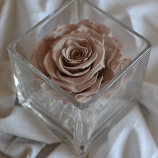 rosa preservada en vaso cuadrado maquillaje