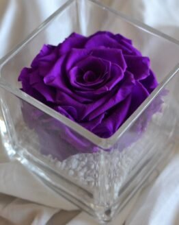 rosa preservada en vaso cuadrado morada
