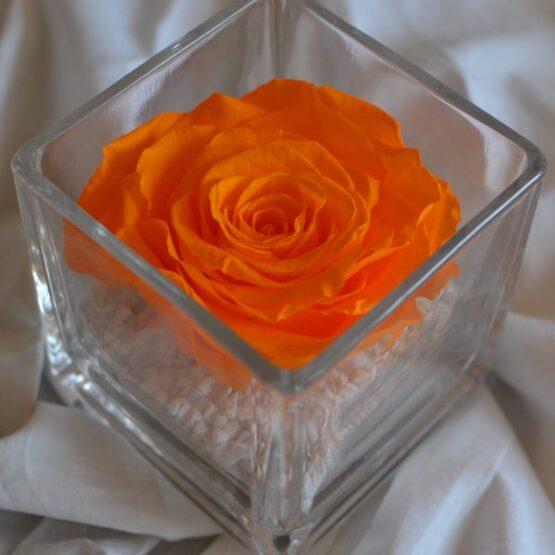 rosa preservada en vaso cuadrado naranja