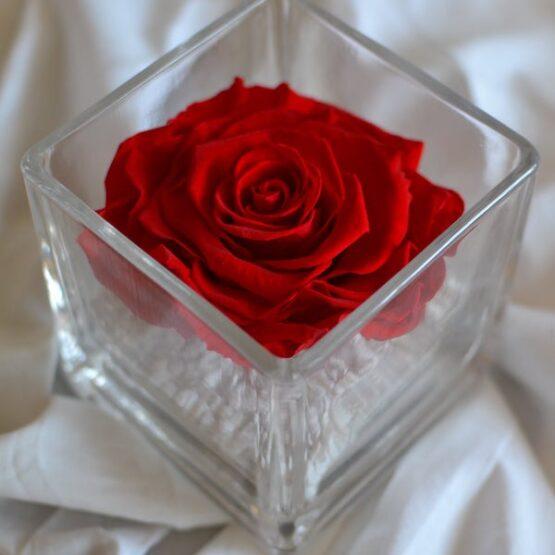 rosa preservada en vaso cuadrado rojo