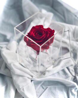 caja metacrilato de rosas