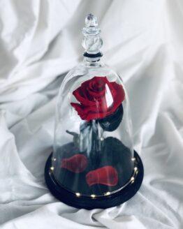 cupula roja bella y bestia
