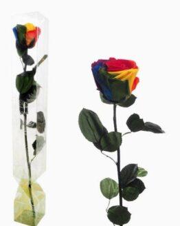 rosa preservada arcoíris
