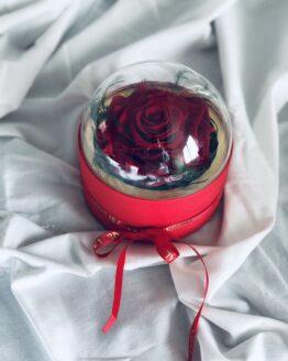 rosa preservada en caja