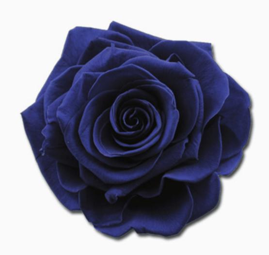 Cabeza Rosa Preservada Azul