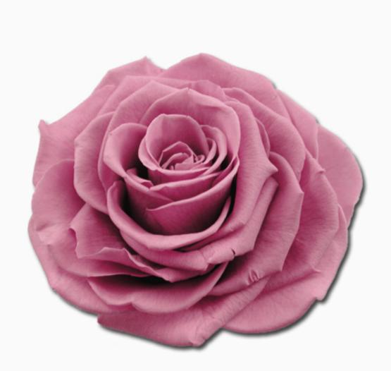Cabeza Rosa Preservada Colorete