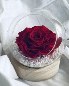 rosa preservada grande